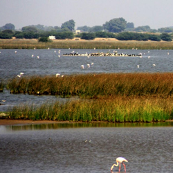 Khijadia Bird Sanctuary in Jamnagar