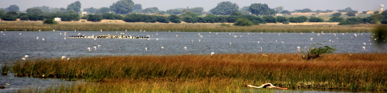 Khijadia Bird Sanctuary