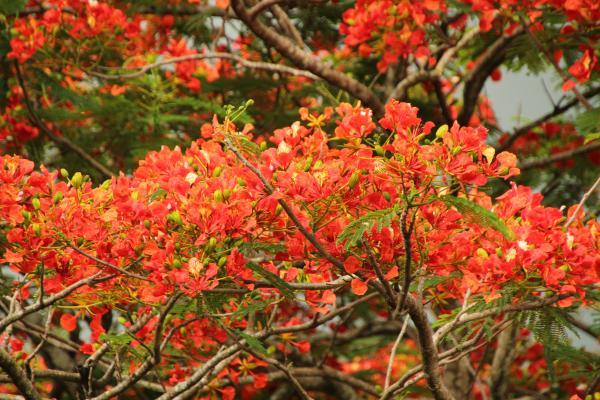Kisantu Botanical Gardens in Kisantu