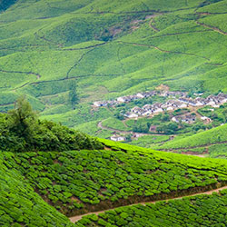 Kolukkumalai Tea Estate in Munnar