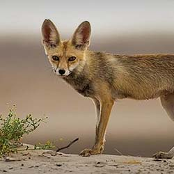 Kutch Desert Wild Life Sanctuary in Kutch