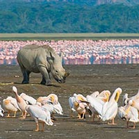 Lake Nakuru National Park	 in Nakuru