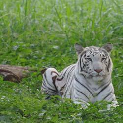 Lakhi Jungle in Bhatinda