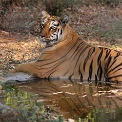 Maharajbagh Zoo in Nagpur