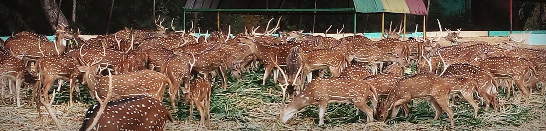 Maitri Bagh-Zoo