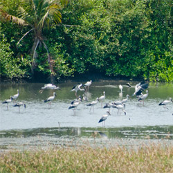 Mangalavanam Bird Sanctuary in Kochi