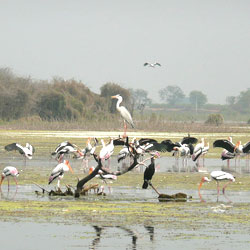 Manjira Bird Sanctuary in Hyderabad