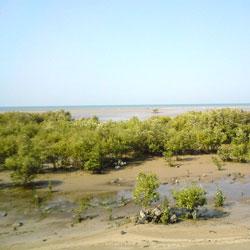 Marine National Park in Jamnagar
