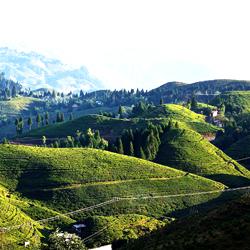 Mirik Hills in Darjeeling