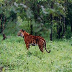 Mundanthurai Wildlife Sanctuary in Tirunelveli