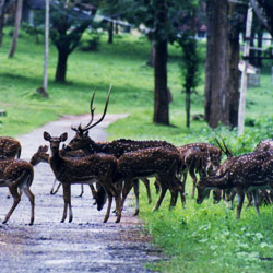 Nagarhole National Park in Kodagu