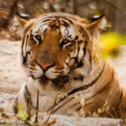 Nagzira Wildlife Sanctuary in Mumbai