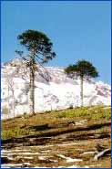 Nahuelbuta National Park in Araucania