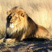 Nambiti Game Reserve in Kwazulu Natal