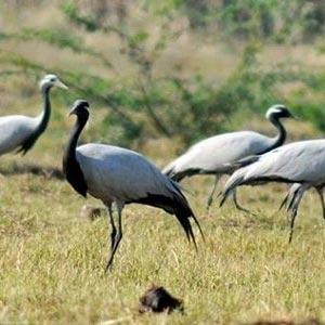 Nandur Madhmeshwar Bird Sanctuary in Nashik