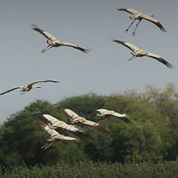 Nandur Madhmeshwar Bird Sanctuary in Nashik
