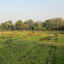 National Rose Garden in Delhi
