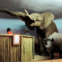 Durban Natural Science Museum in