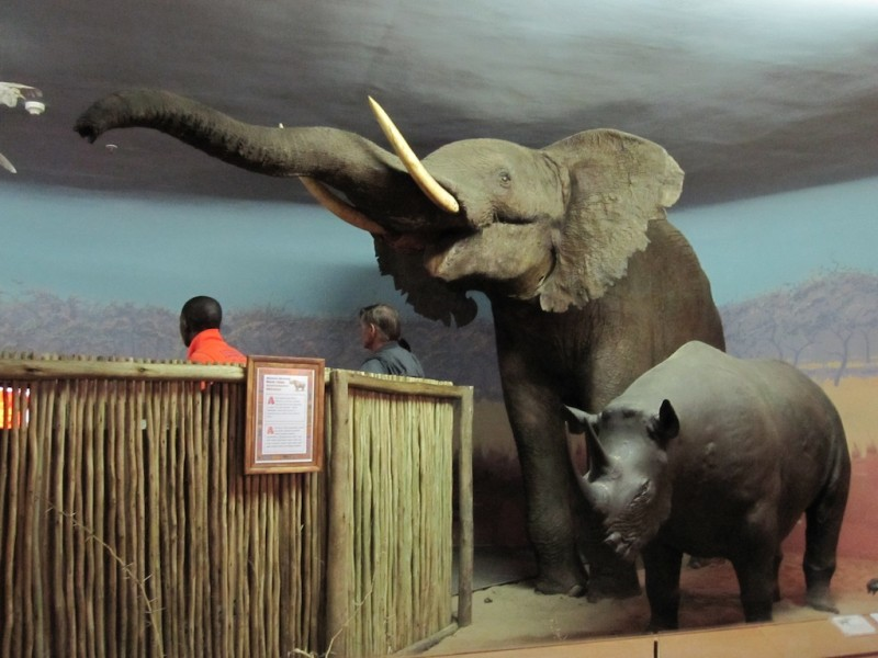 Durban Natural Science Museum in Durban