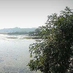 Nawabganj Bird Sanctuary in Kanpur
