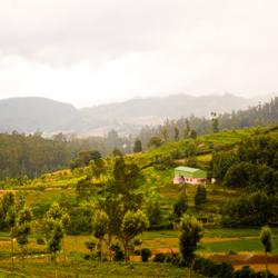 Nilgiri Hills in Ooty