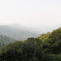 Nyungwe Forest National Park in Northwestern Rwanda