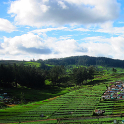 Ooty Hills in Ooty