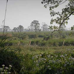 Orang National Park in Tezpur