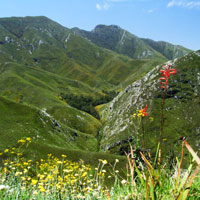 Outeniqua Nature Reserve in Garden Route