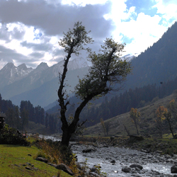 Overa Wildlife Sanctuary in Kashmir