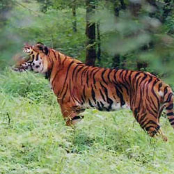Pakhui Wildlife Sanctuary in Kameng