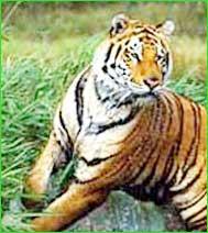Palamau Tiger Reserve in Chotanagpur Plateau