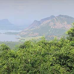 Palni Hills in Kodaikanal