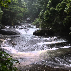 Palaruvi Waterfalls in Kollam
