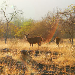 Panna National Park in Panna