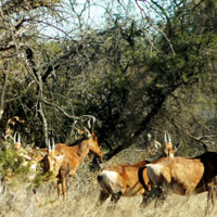 Polokwane Game Reserve in Limpopo
