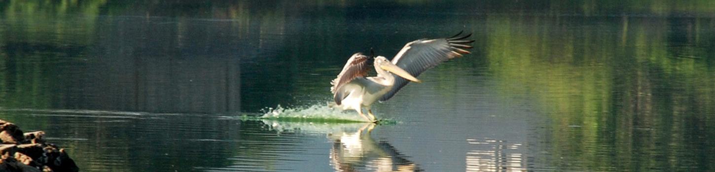 Porbandar Birds Sanctuary