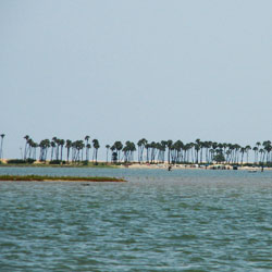Pulicat Lake in Chennai