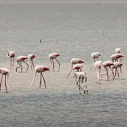 Pulicat Lake Nellore in Nellore