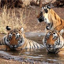 Rajgir Wildlife Sanctuary in Rajgir