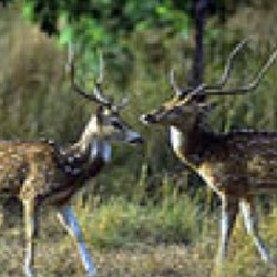 Ramnagar Wildlife Sanctuary in Kashmir