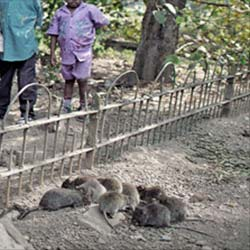 Rat Park in Kolkata