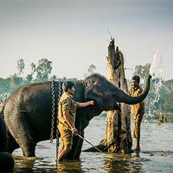 Sakrebayalu Elephant Camp in Shimoga
