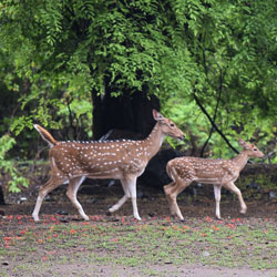 Sanjay Gandhi Wildlife Sanctuary in Mumbai