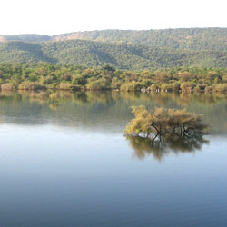Sariska Wildlife Sanctuary in Alwar