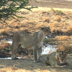 Sasan Gir Wildlife Sanctuary in Junagadh