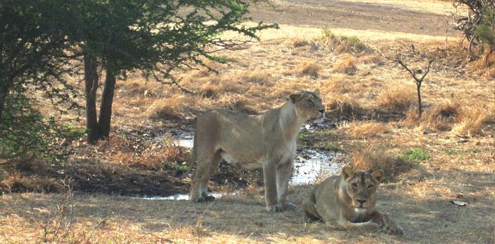 Sasan Gir Wildlife Sanctuary