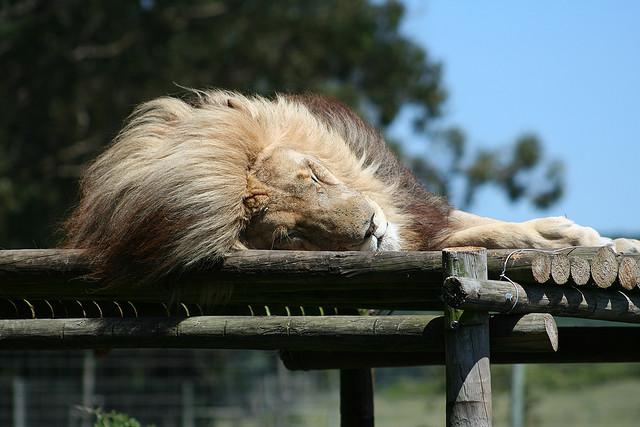 Seaview Lion Park