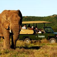 Shamwari Game Reserve in Eastern Cape