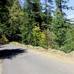 Shimla Glen in Shimla